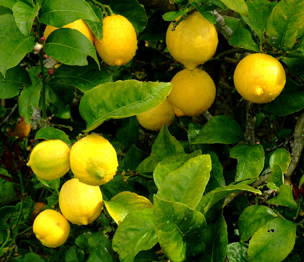 lemons-1182343-1919x1649